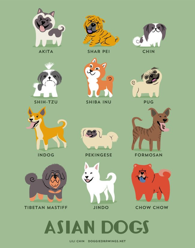dogs-of-the-world (10)