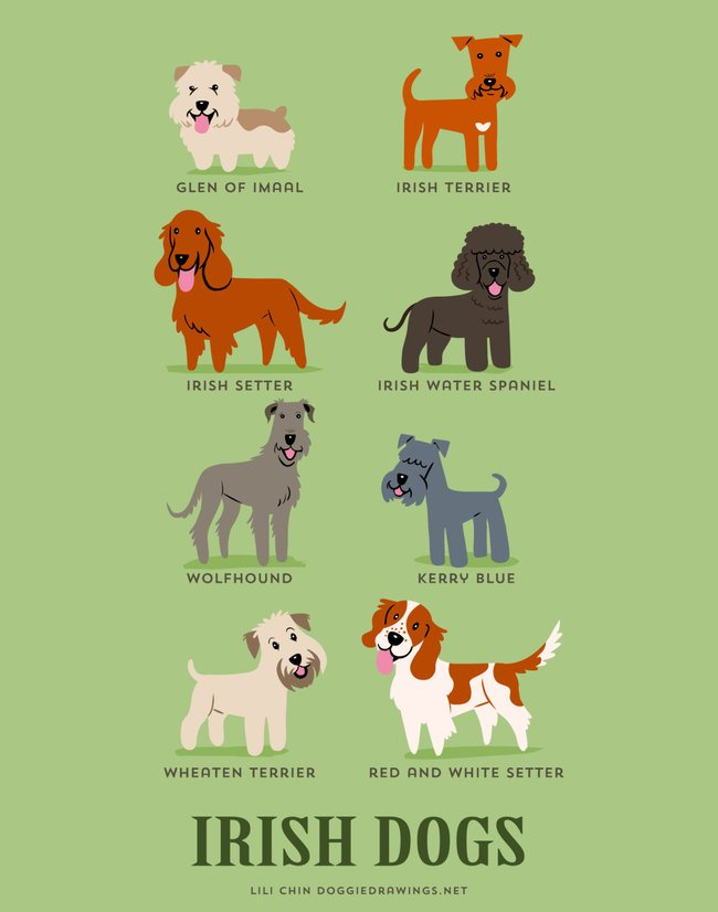 dogs-of-the-world (12)