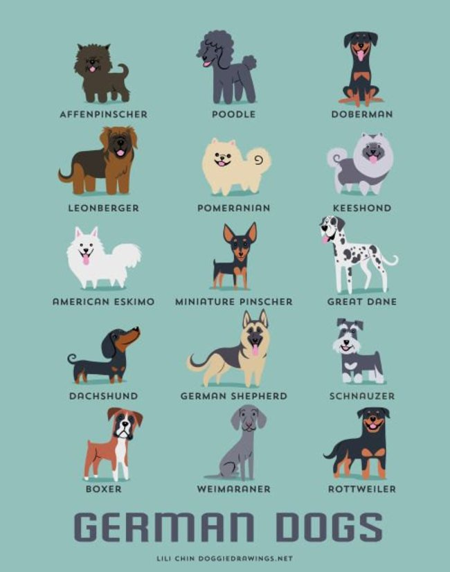 dogs-of-the-world (14)