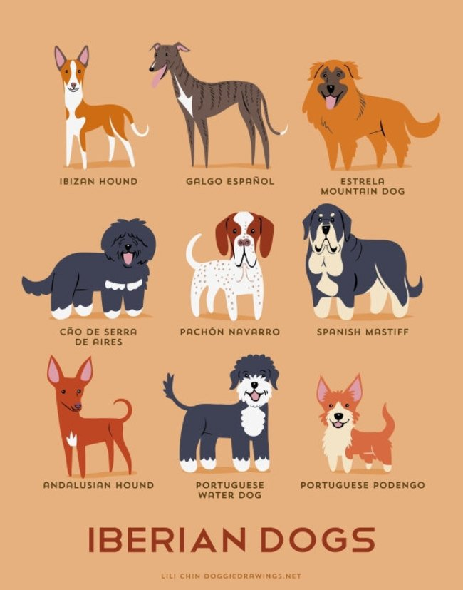 dogs-of-the-world (17)
