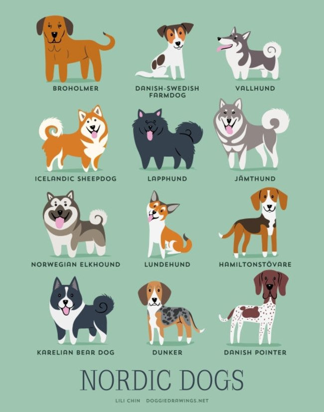 dogs-of-the-world (19)