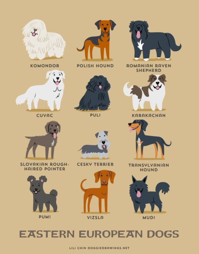 dogs-of-the-world (20)