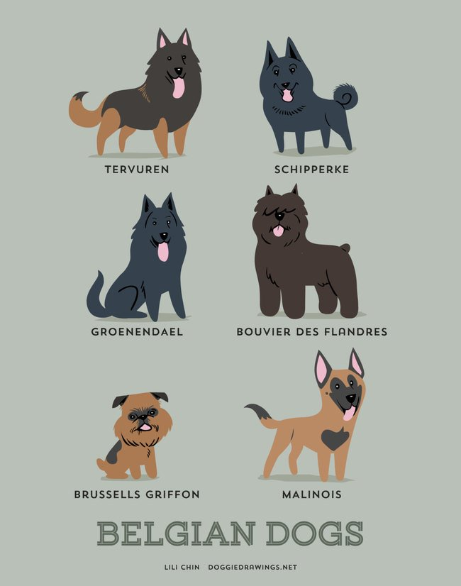 dogs-of-the-world (3)