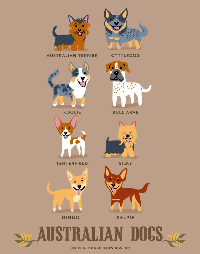 dogs-of-the-world (4)