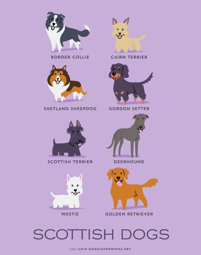 dogs-of-the-world (6)