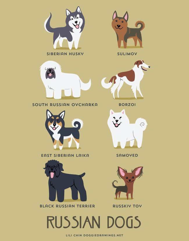 dogs-of-the-world (9)