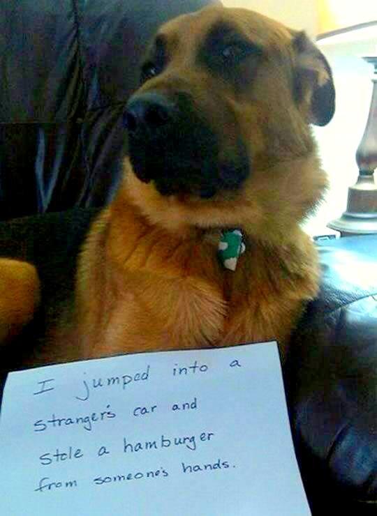 dog-shaming (1)