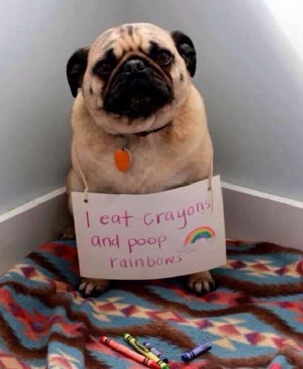 dog-shaming (11)