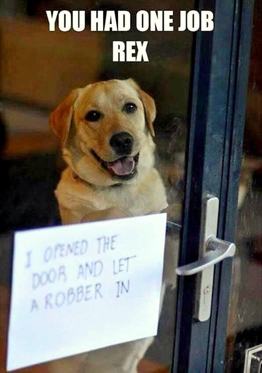 dog-shaming (3)