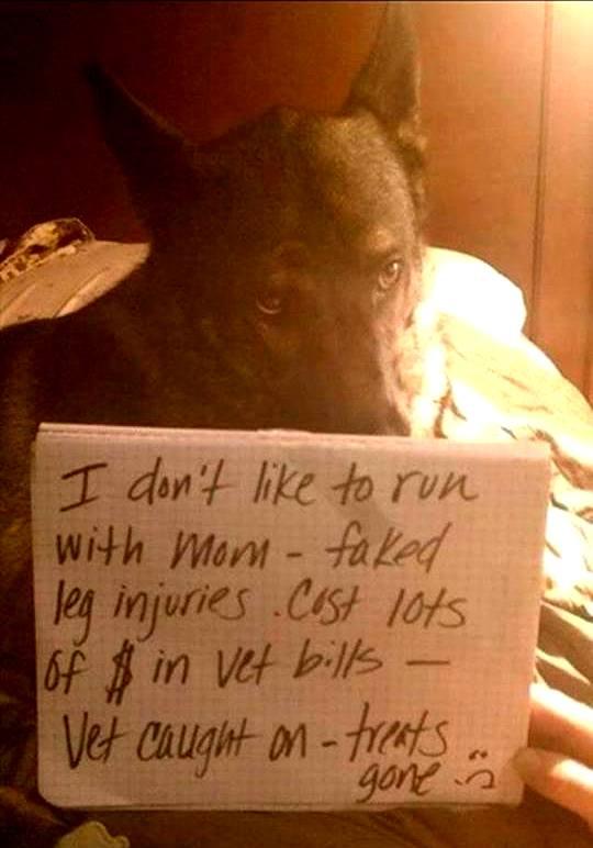 dog-shaming (4)