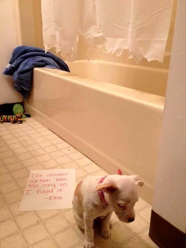 dog-shaming (5)