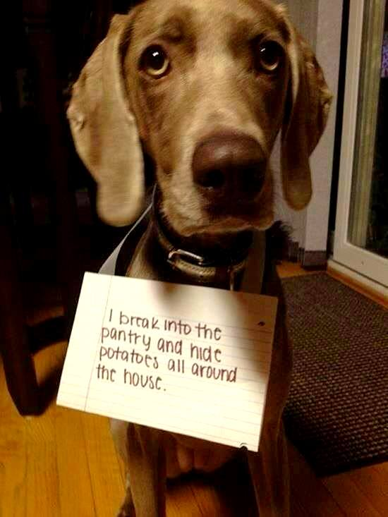 dog-shaming (7)