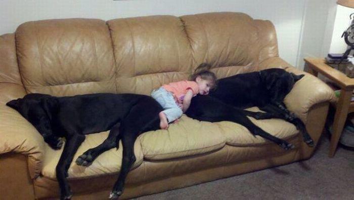 kids-sleep-with-dogs (17)