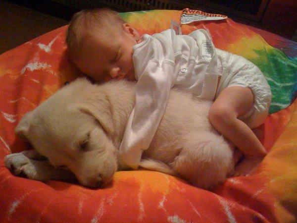kids-sleep-with-dogs (18)