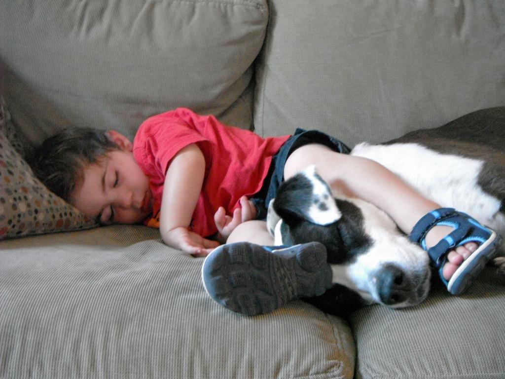 kids-sleep-with-dogs (3)