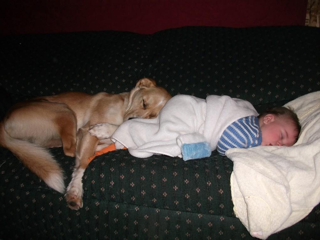 kids-sleep-with-dogs (4)