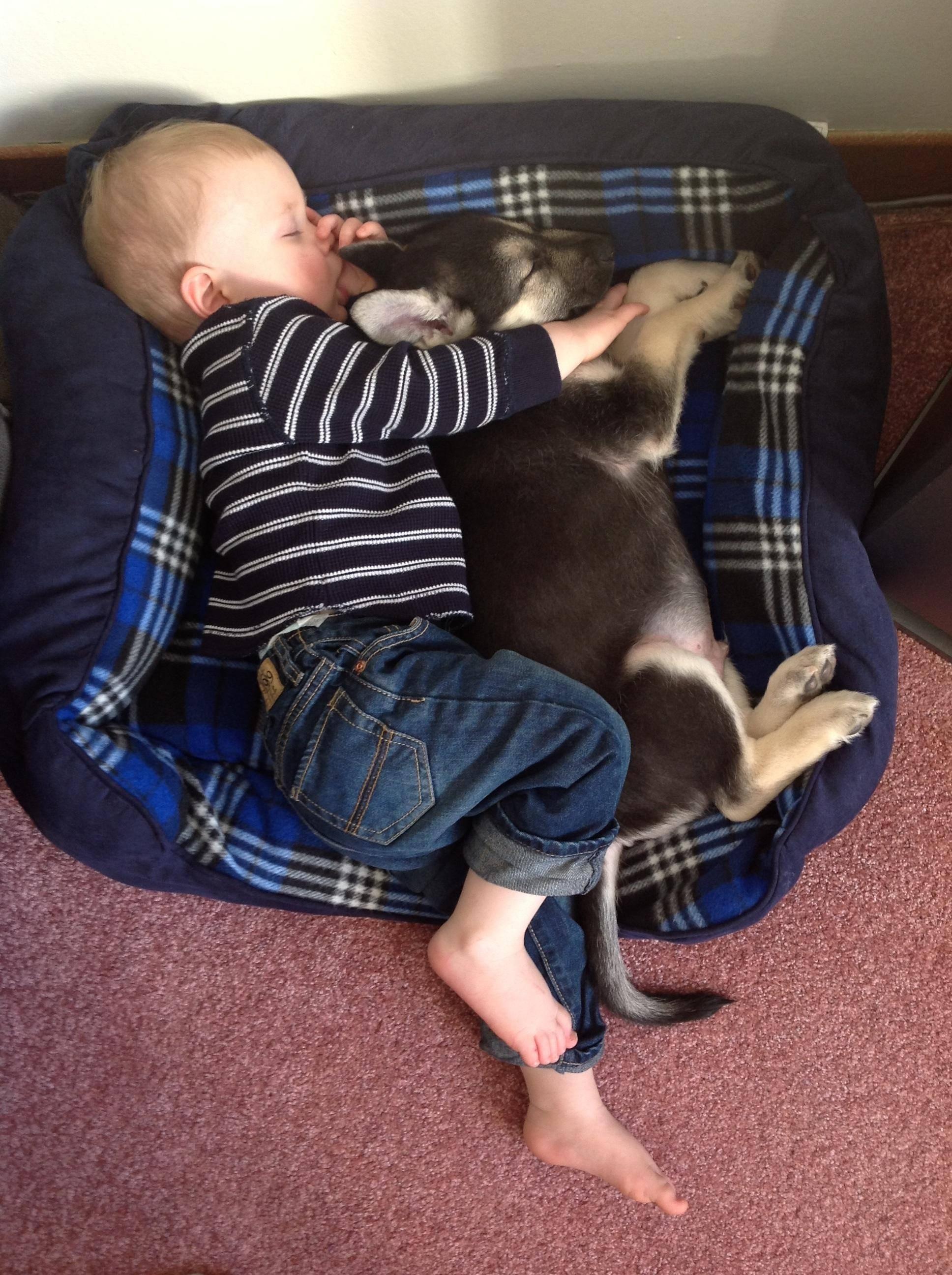 kids-sleep-with-dogs (6)