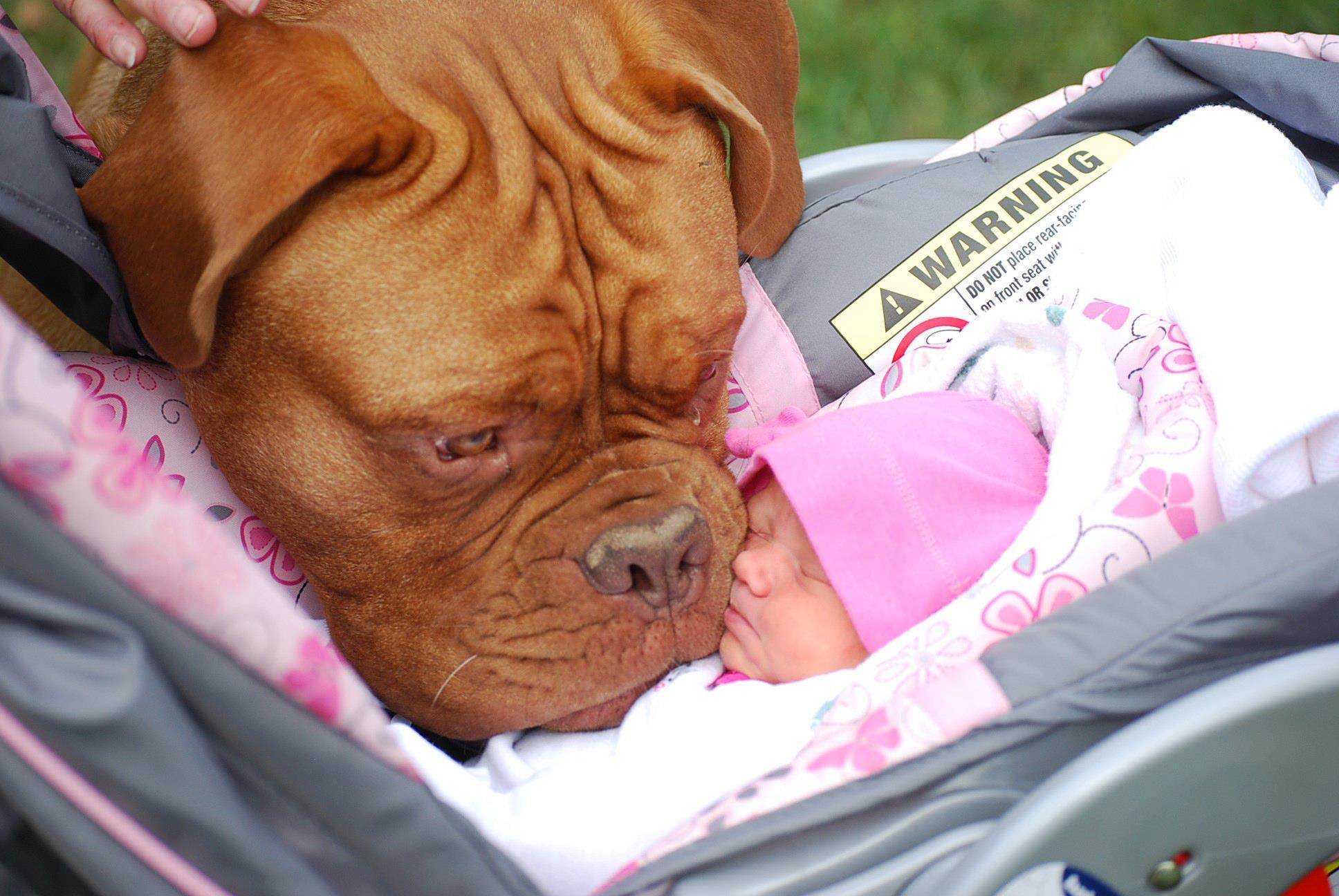 kids-sleep-with-dogs (7)