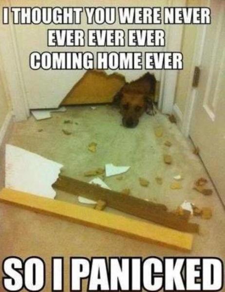 dog-memes (1)