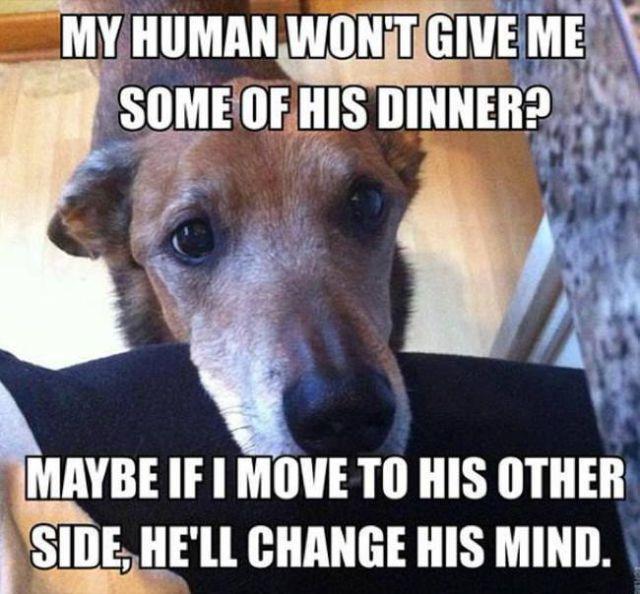 dog-memes (3)