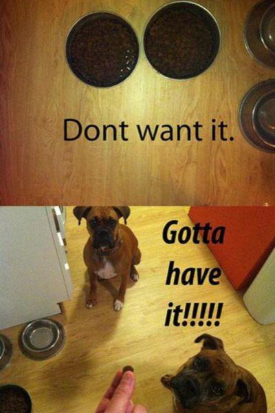 dog-memes (5)