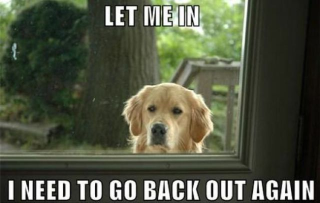 dog-memes (8)