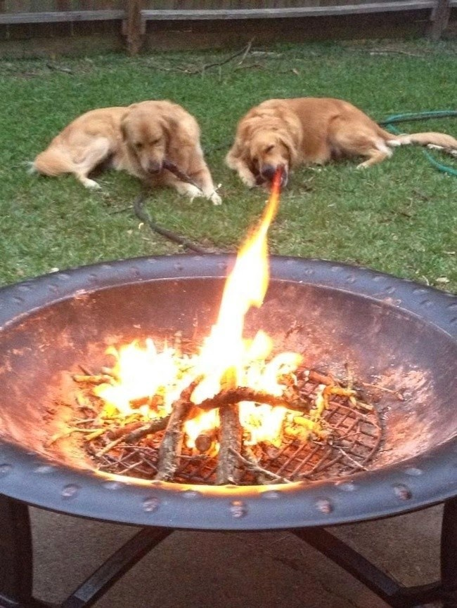 dog-perfectly-timed (11)