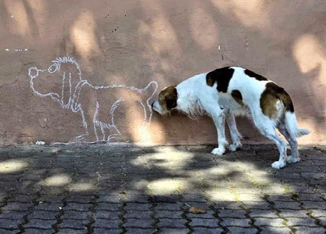 dog-perfectly-timed (13)