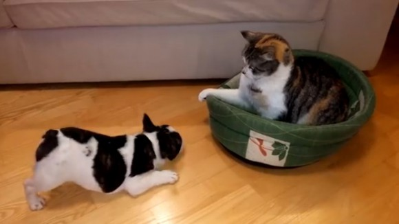 puppy-cat-bed