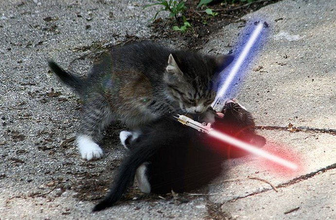 "This is perhaps the dumbest, funniest thing I have seen all month. Check out ""Animals with Lightsabers..."""