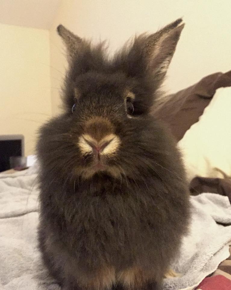 bunny (2)