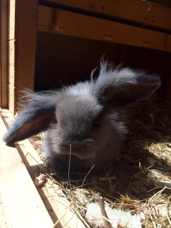 bunny -3