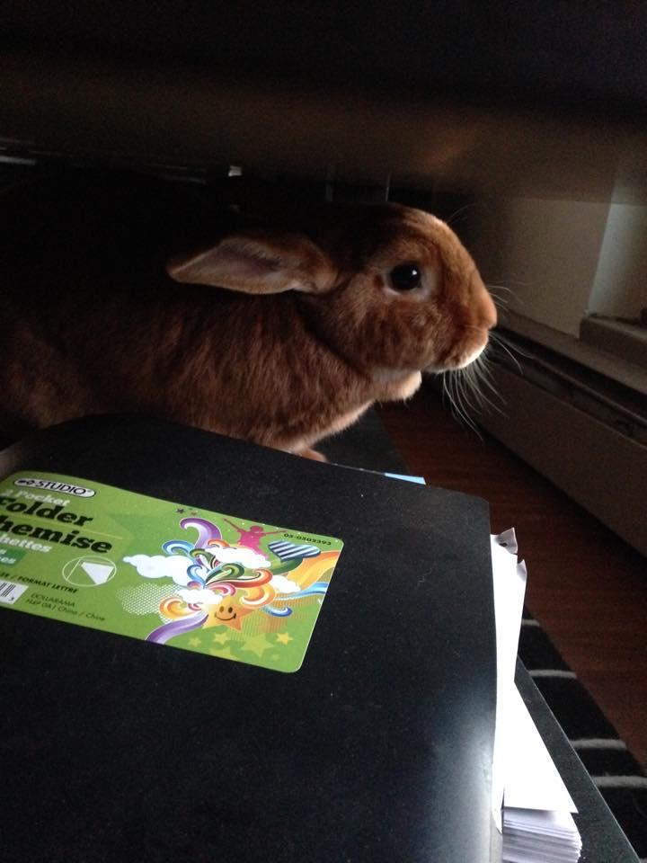bunny (7)