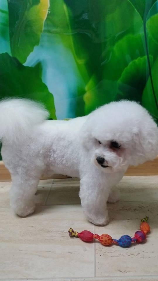 fluffy-kara (1)