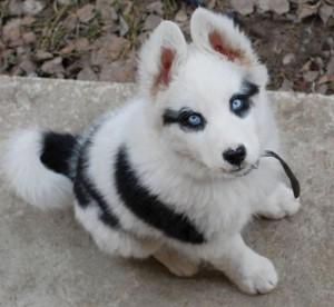 eyeliner dog