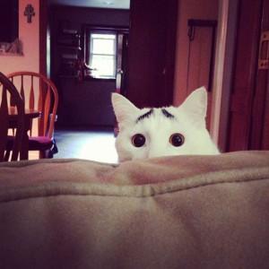 cat eyebrows