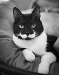 cat white mustache