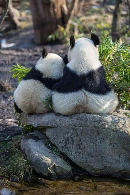 Pandas Lean on Me