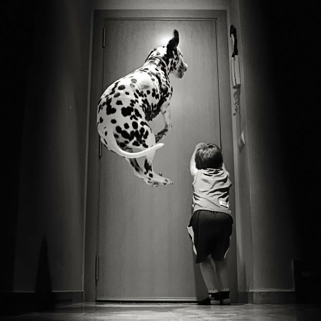 Dog jumping at door to go outside