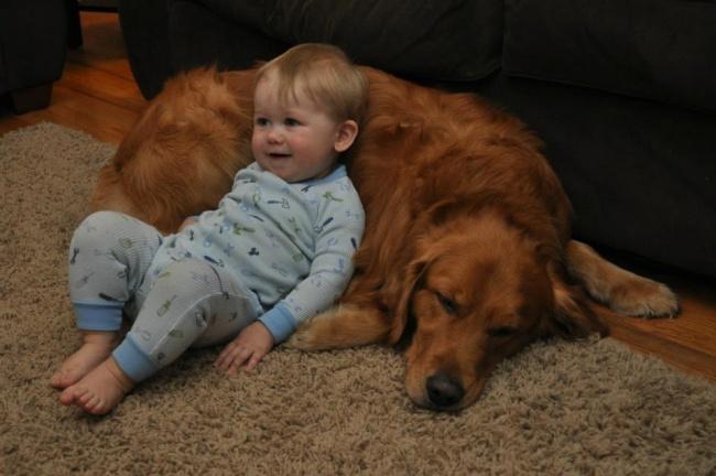 Dog and Golden Retriever