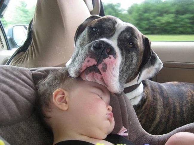 And a chin to sleep on.