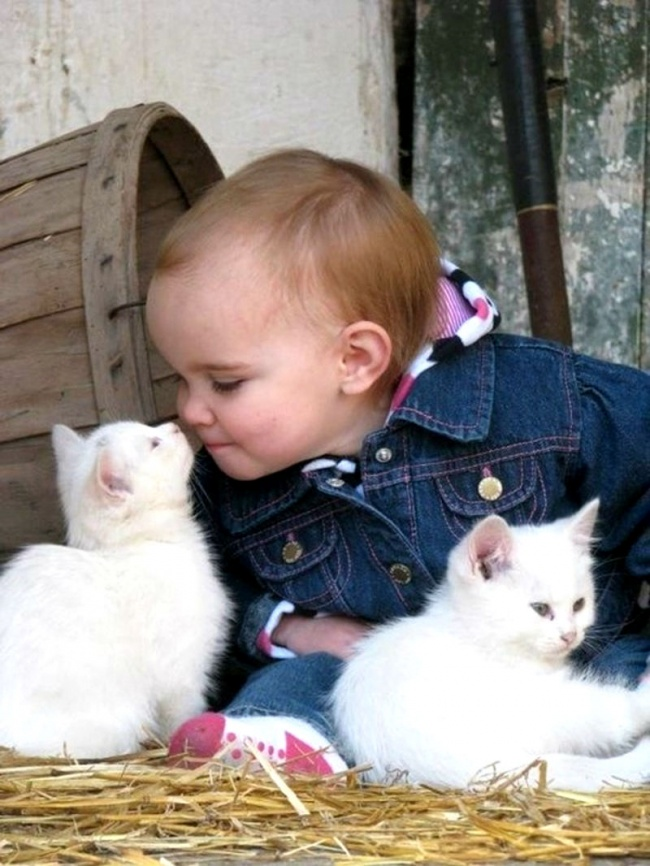 Cats and kid