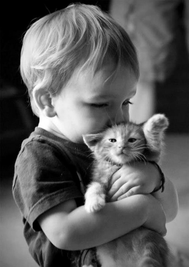 Boy hugs kitten