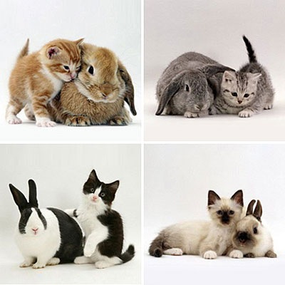 Bunnies and Cats