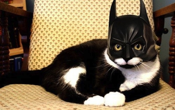 Batcat & 27 Hilarious Photos of Pets in Costume | Cuteness Overflow