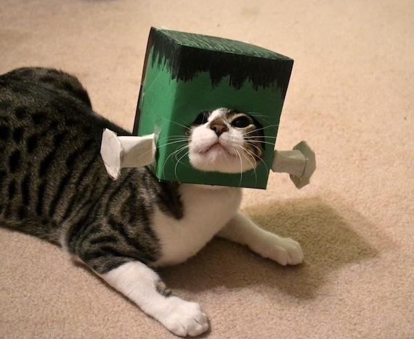 Franken-cat