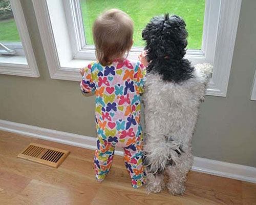 Dog and kid looking outside
