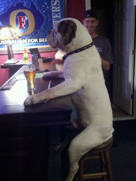Dog at bar