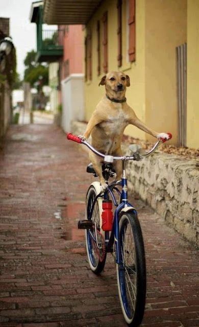 Dog Riding Bicycle