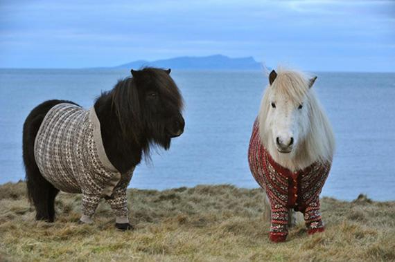 Mini Horse Blankets